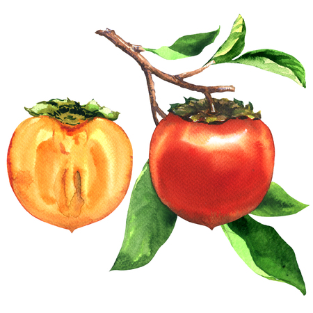 Branch of ripe persimmons with leaves and sice, half of fresh persimmon isolated, hand drawn watercolor illustration on white Stockfoto