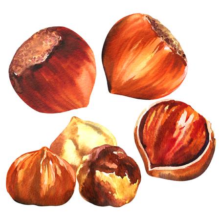 Set of hazelnuts, purified hazelnuts and shells, closeup nuts hazelnut snack isolated, hand drawn watercolor illustration on white