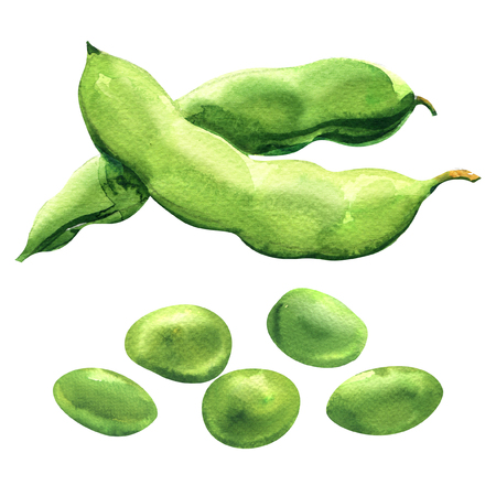 fresh green peas, fresh beans, healthy food, organic vegetable, isolated, hand drawn watercolor illustration on white