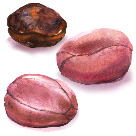 whole cola nuts, kola nut, african fruit, bitter kola, nigerian traditional food, closeup, isolated, hand drawn watercolor illustration on white