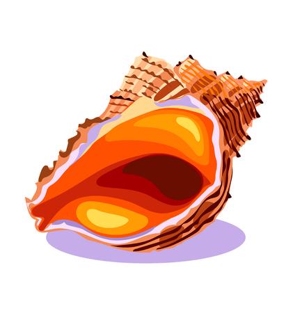 Concha de mar en primer plano, concha de mar, objeto aislado, concepto de verano, símbolo, icono, ilustración vectorial sobre fondo blanco. Ilustración de vector