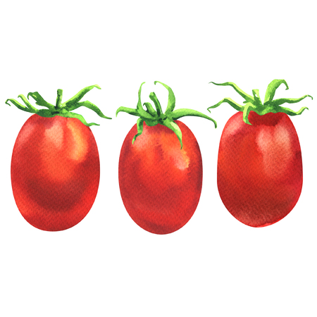 Three fresh juicy red cherry tomatoes in line, organic food ingredient, close up, isolated, hand drawn watercolor illustration on white background Stock Photo