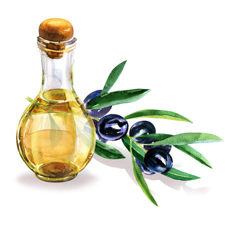 Bottle of fresh organic extra virgin olive oil and black olive branch with leaves isolated, hand drawn watercolor illustration on white background