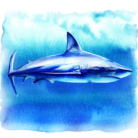 Ocean great white shark in the deep blue water, side view, big fish predator, hand drawn watercolor illustration on white background