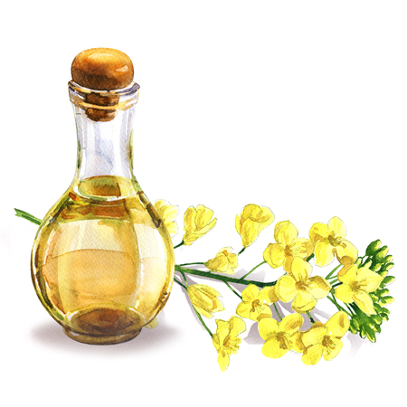 Bottle of fresh organic rape seed oil and oilseed rape flowers, flowering rapeseed canola or colza, isolated, hand drawn watercolor illustration on white background Stock Photo