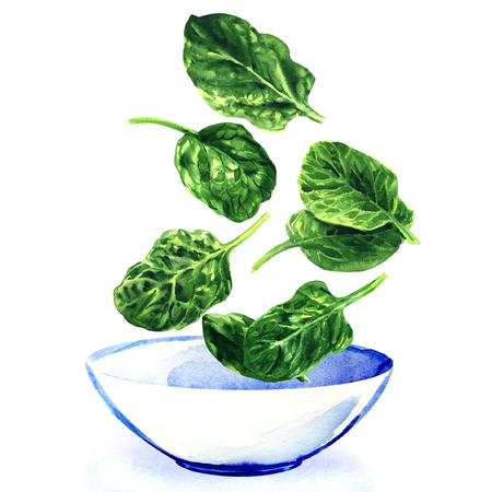 Fresh green leaves of spinach falling into white bowl of salad, hand drawn watercolor illustration on white background 스톡 콘텐츠
