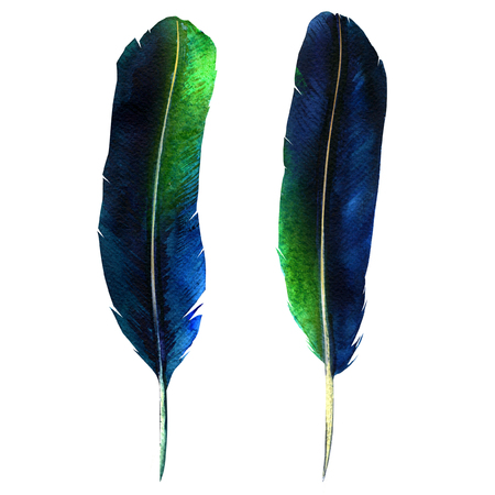 Two dark feathers, vibrant feather set, bird fly design, isolated, hand drawn watercolor illustration on white background