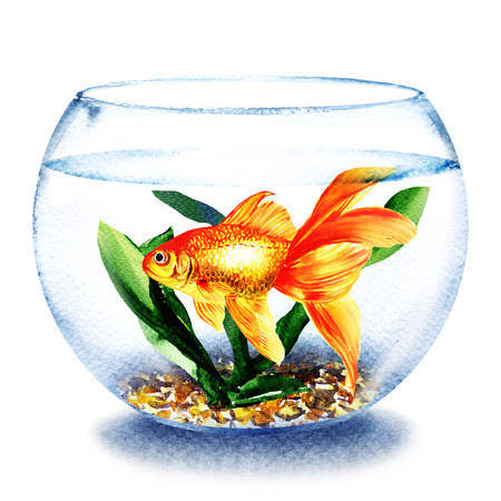 Goldfish swimming in the water in transparent round glass bowl, fish in aquarium, comfort zone concept, hand drawn watercolor illustration on white background Stock Photo