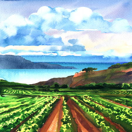 Rural panoramic landscape with vineyard, ocean, rocks, blue sky and clouds, beautiful view, summer time, vacation and travel concept, hand drawn watercolor illustration, nature background
