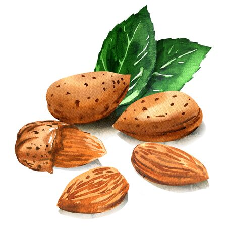 Group of tasty almond nut with green leaves, whole nuts in skins and peeled, isolated, hand drawn watercolor illustration on white background Stok Fotoğraf
