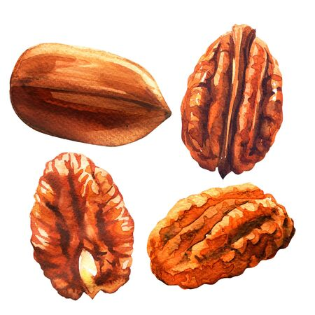 Tasty pecan nut, whole nuts in skins and pecan halves peeled, dried pecans set, close up, isolated, hand drawn watercolor illustration on white background Imagens - 131904223