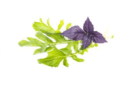 Fresh organic green rukkola, rucola or arugula and violet basil, heap, salad leaves, vegetarian food, close-up, isolated on white background