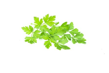 Tasty green leaves of parsley, fresh green plant, parsley bunch, vegetarian food, natural aromatic spice, isolated on white background Imagens - 131904290