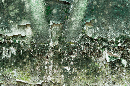 unclean: algae texture background, wall unclean Stock Photo