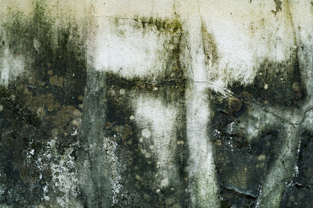 unsanitary: algae texture background, wall unclean Stock Photo