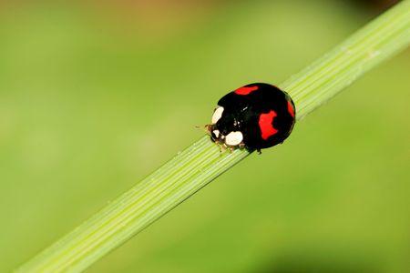 Ladybug Stock Photo - 4319457
