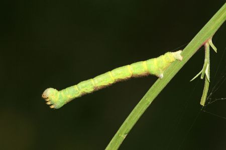 mimicry: insects Stock Photo