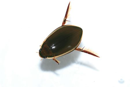 insects Stock Photo - 4816737