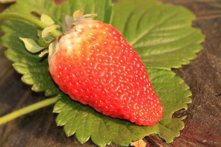 strawberry  photo