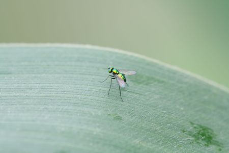 tabanidae: insects Stock Photo