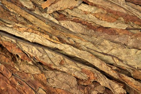 north china: dry tobacco leaf in north china
