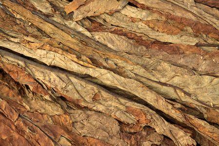 dry tobacco leaf in north china