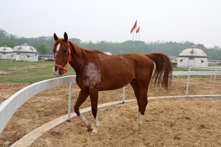 steed: close up of a horse, north china