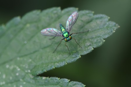 tabanidae: close up of tabanidae, a kind of insects