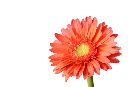 close up of gerbera flowers on a simple color background. Stock Photo - 7132672