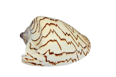 beautiful shells in a white background Stock Photo - 7132604