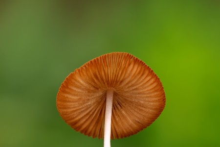 a kind of mushroom, close up of pictures on a simple background.  photo
