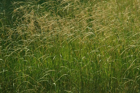 thriving: close up of green weeds, growing in early spring, gives the impression of a thriving. Stock Photo
