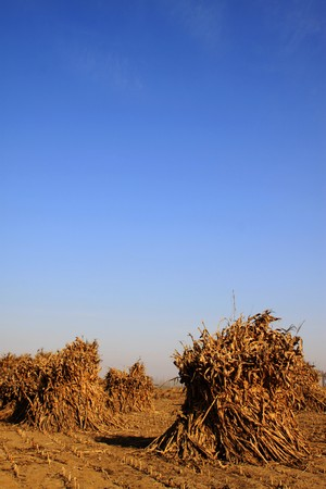 pyre: rural field scene in the countryside, northern China. Stock Photo