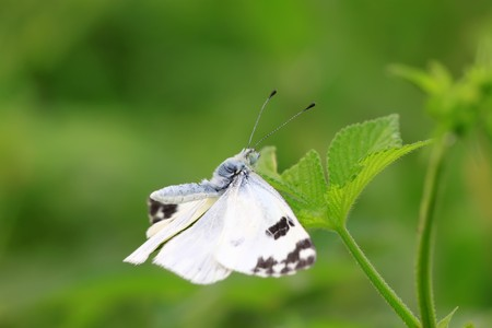 close up of butterfly in the green background. Stock Photo - 7694530