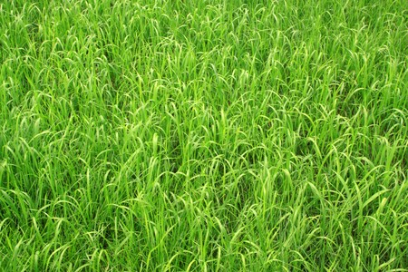 is thriving: green weed grows on the ground, growing in early spring, gives the impression of a thriving.