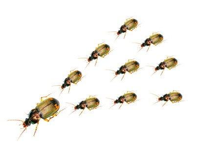 beetles on a white background. Stock Photo - 7795225