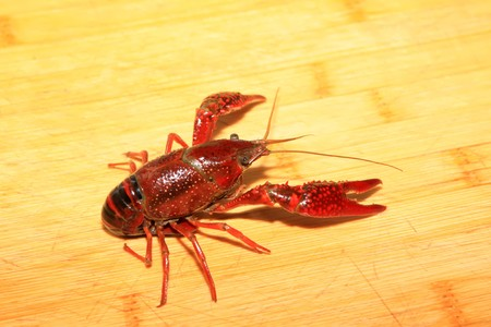 close up of crayfish which can be made into delicious dishes photo