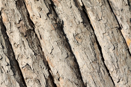 orderly rows of pine bark, close up of pictures  Stock Photo - 8482235