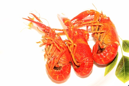 species plate: close up of cooked crayfish on a plate.