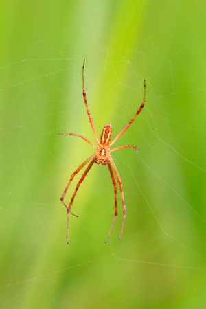 reversed: a spider upside down in the net, take photos in the wild natural state. Stock Photo
