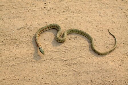 a picture of a snake, close up of pictures photo