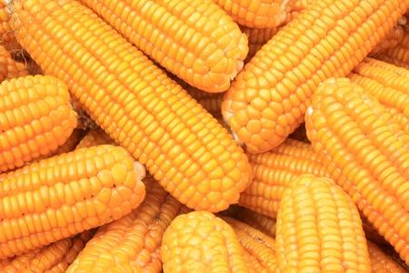 corn bonzi material in China rural Stock Photo - 8810695