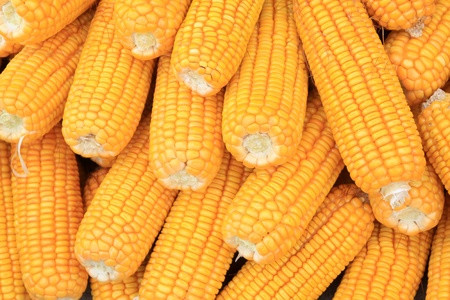 corn bonzi material in China rural Stock Photo - 8810722