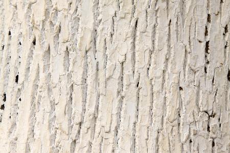 closeup of scholartree bark  Stock Photo - 9309609