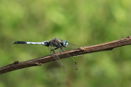 close up of a dragonfly photo