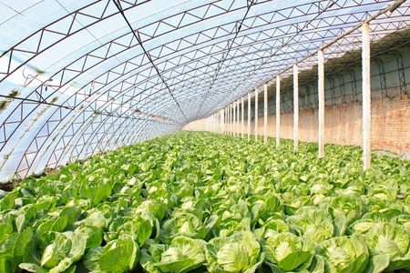 the greenhouse: closeup of pictures about greenhouse in china Stock Photo