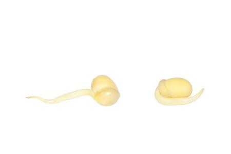 soya bean: bud de haba de soja sobre el fondo blanco, detalle de im�genes Foto de archivo