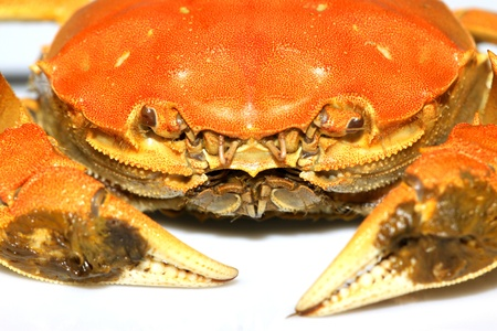 clamps: closeup of crab on a white background