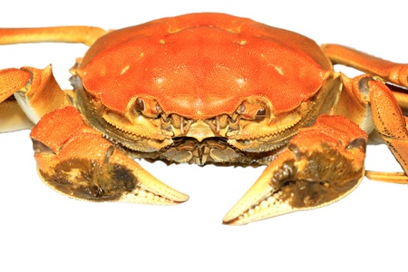 raw material: closeup of crab on a white background