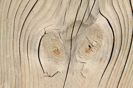 closeup of pictures woodiness grain